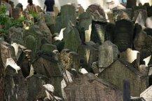 Cimitero di Praga