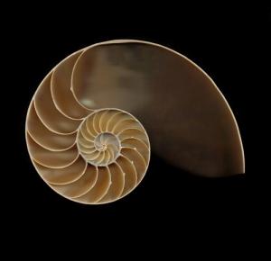 La sezione di un Nautilus